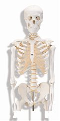 人体骨格モデルA10