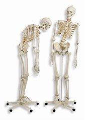 人体骨格モデルA15