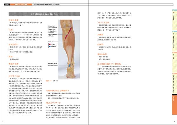 マッサージのための機能解剖学